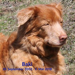 Baki, im Alter von über 15,5 Jahren