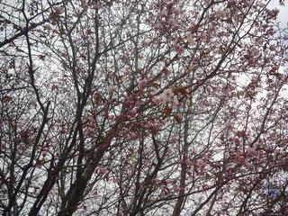 札幌市白石区栄通14丁目 桜 自然を大切に e-arts(イーアーツ)横