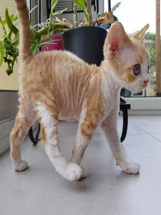 Les chatons à Sandra Arnolfo New