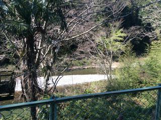 目の前は多摩川上流