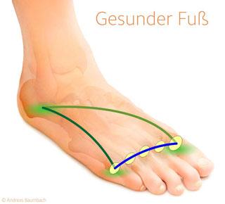 Gesunder Fuß mit gesundem Fußgewölbe © Andreas Baumbach