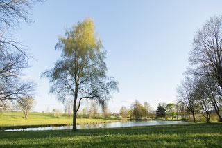 Dorfweiher Nordhausen