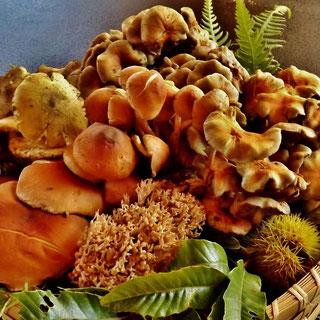 美菜ガルテンふるかわ 幻の香茸食べたいコウタケきのこ料理松茸料理国産松茸地物きのここうむそうぼうずいくちしばもちきしめじしろまいたけさるまいろうじあみたけこうたけ木曽産天然きのこ