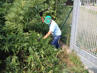 Anonimi boscaioli alle prese con la flora locale