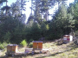Vue avec les ruches de Alain au fond à droite