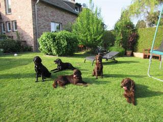 Amira, Baddy, Kira, Oskar und Flash