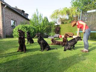 Oskar, Baddy, Cascha, Flash, Kira, Amira