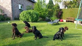 Oskar, Baddy, Flash, Cascha, Amira und Kira