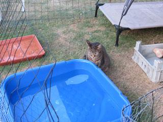 Wenn die Luft rein ist, traut sich Lilly ins Welpengehege und schaut sich neugierig um.