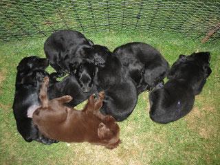 Ein ganzer Haufen müder Hunde...
