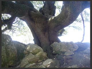 Natur - Sardinien - Angela Göser - Baum
