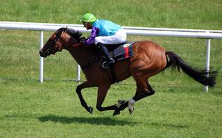 Rennpferde im Rennen im vollem Galopp