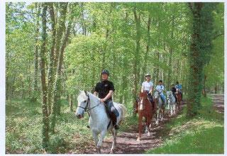 Le Teich, Bassin Arcachon  -  excursiones a caballo