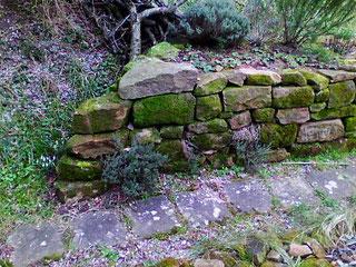 Digitalfoto einer Trockenmauer (vgl. Wärmebild, oben). Aufnahme: Ende Februar 2016.