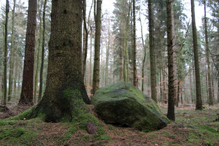 Findling in den Schwarzen Bergen. Quelle: Lisa Krause