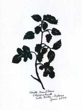 Scherenschnitt Weiße Maulbeere