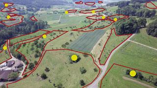 Die Ökologische Infrastruktur für den Neuntöter besteht aus einem Netz von Lebensräumen, verteilt über die ganze Landschaft. (Gelb: mögliche Brutplätze, rot: mögliche Jagdgebiete). Foto: BirdLife Schweiz