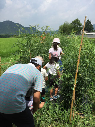 まずはみんなで畑で収穫体験!