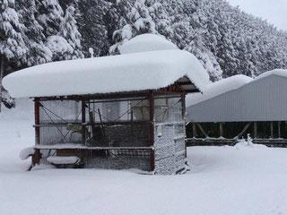 何もかもが雪に覆われました