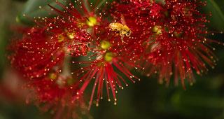 ポフツカワの花
