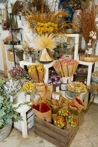 Trockenblumen in Wien kaufen