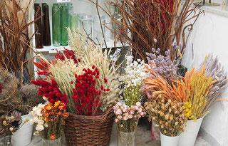 Auswahl an Trockenblumen und Zweigen Wien