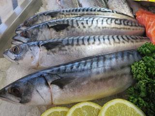 Frische Makrelen von Fisch Mehrholz