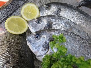 Doraden von Fisch Mehrholz