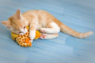 Katze beschäftigen mit Katzenminzekissen