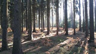 Forstliche Dienstleistungen der plb: Holzeinschlag, Durchforstung, Bestandspflege, Stubbenrodung, Brennholz, Kaminholz etc.