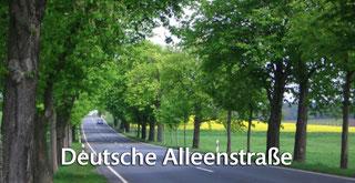 Die Deutsche Alleenstraße entdecken!