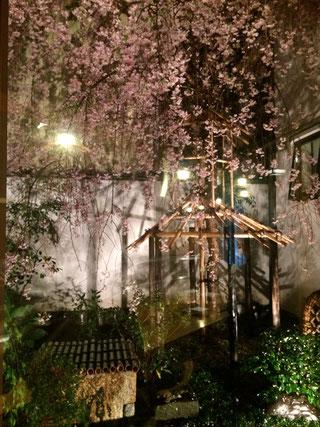 坪庭には夜桜がライトアップされていました。