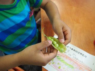 えんどう豆もプクプクした手もかわいい!