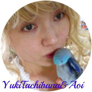 立花雪 YukiTachibana & Aoi  あおい夢工房