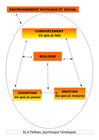 Modèle interractif expliquant les 3 niveaux d'intervention des TCC : comportemental, cognitif et émotionnel. Petiteau, psychologue Baillargues