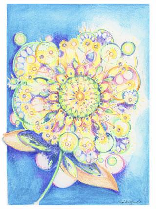 fleur, dessin fleur, severine saint-maurice, lescerclesdelumiere.com, les cercles de lumiere, crayons de couleur