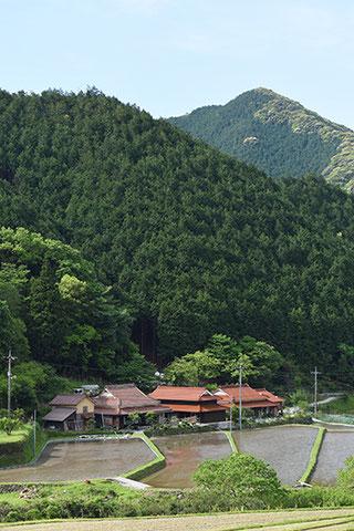 湯本温泉から俵山温泉へ向かう途中で。山陰路では石州瓦と田んぼの風景を幾度となく見かけました。この風景は山陰を訪ねた時の楽しみのひとつです