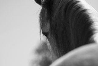 Sandrine Fournier, Conseillère en Fleurs de Bach, Agréée par le Centre Bach en Angleterre, Sophrologue, Sophrologie, Communication Animale, Médiation animale, Sophro-cheval, Bio Kinésiologie, EFT, Access Consciousness, Bars d'Access, Lifting facial corps