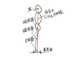 静止立位時の床反力ベクトル作用線