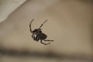 蜘蛛が我が物のように住んでいました。