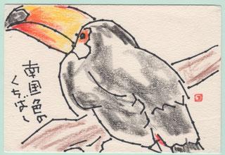 鳥類 オニオオハシ
