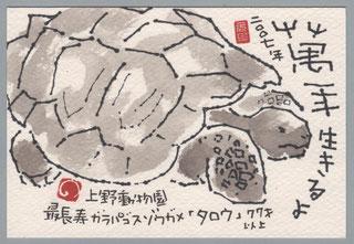 ゾウガメ 年賀