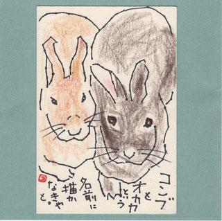 ウサギ コンブとオカカ