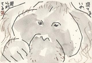 オランウータン 顔