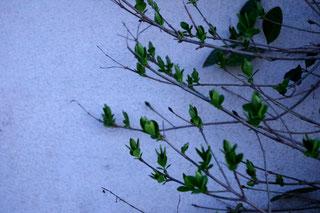 Taize Taizé 2018 Zaun Ostern Baum Strauch grünen Blätter