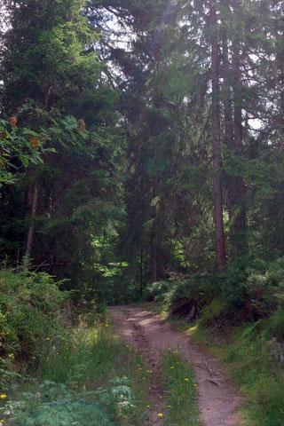 Kellermannsweg auf dem Wanderweg Wurzelpfad nahe Schluchsee