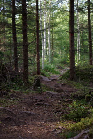 Wald Pfad Weg Nadelwald Tannen Fichte Trampelpfad Schweden