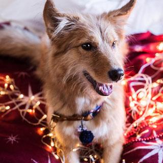 Hund mit Halsband aus Leder und Tau