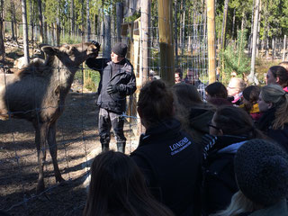 Scandinavie elandenpark studiereis zweden