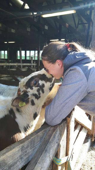 stage melkvee koeien melken studiereis